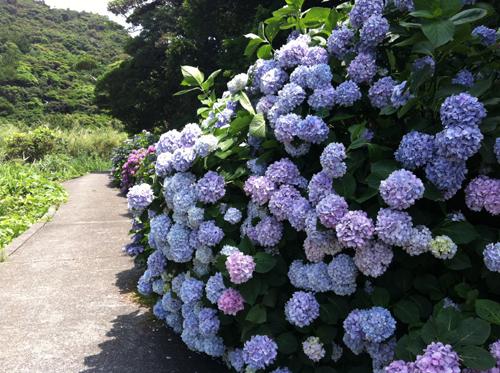 伊島!徳島県の島_b0067774_17464177.jpg
