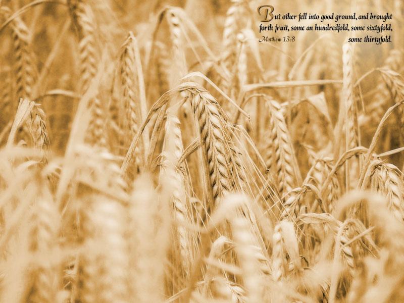7月3日詩篇126-130篇『試練の中での種まき』_d0155777_22193270.jpg