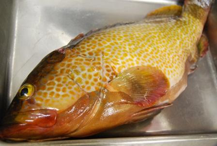 旬の美味しいお魚_e0025817_23385129.jpg