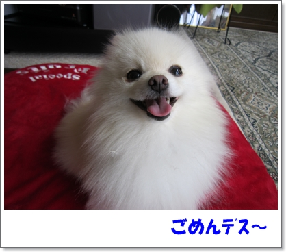b0167519_10222813.jpg