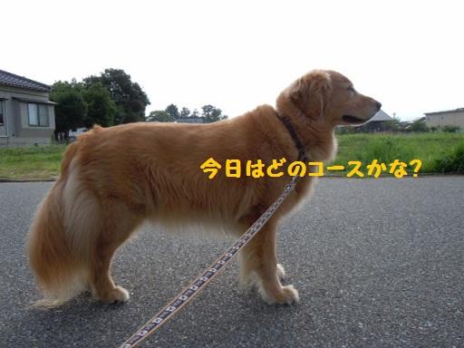 f0114128_1271339.jpg