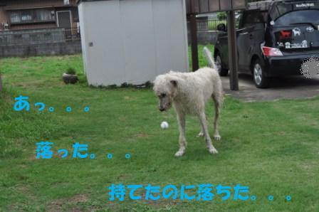f0176830_18322061.jpg