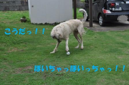 f0176830_18332995.jpg