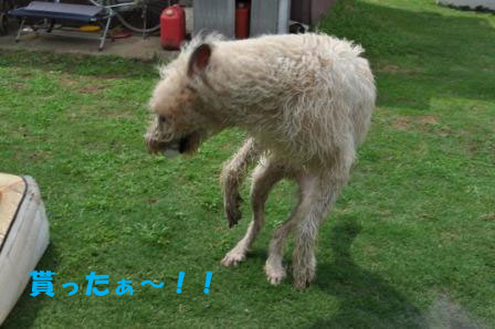 f0176830_18394677.jpg