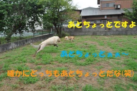 f0176830_1856631.jpg