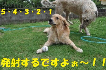 f0176830_19145245.jpg