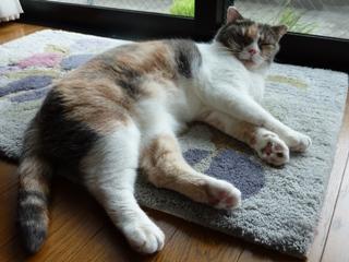 猫のお友だち マミちゃん編。_a0143140_23504260.jpg