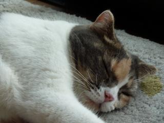 猫のお友だち マミちゃん編。_a0143140_23513949.jpg