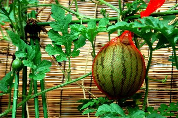 和歌山県植物公園緑花センター _b0093754_23411091.jpg