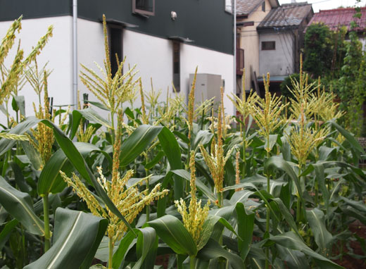 農業倶楽部の収穫祭_b0015157_0223085.jpg