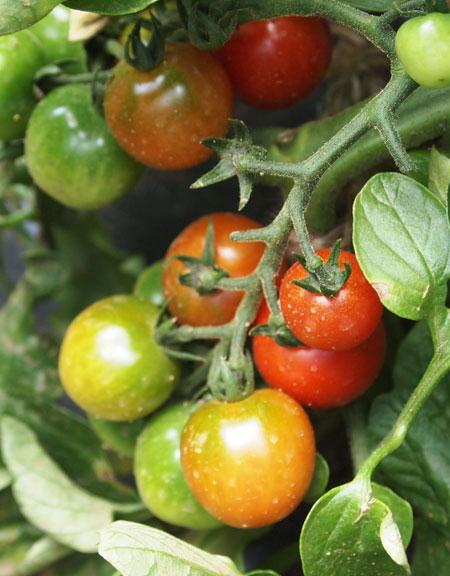 農業倶楽部の収穫祭_b0015157_032159.jpg