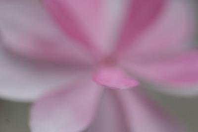 d0141365_2012390.jpg