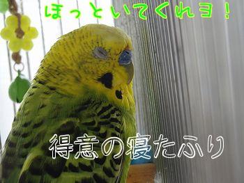 f0196665_0134697.jpg