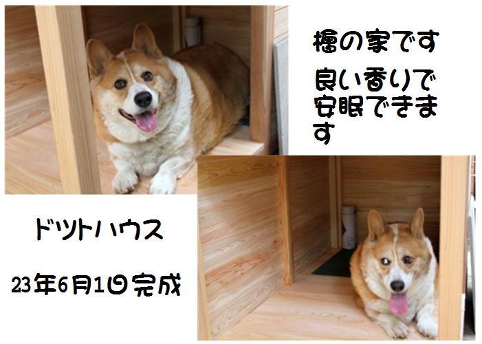 f0003174_1063531.jpg