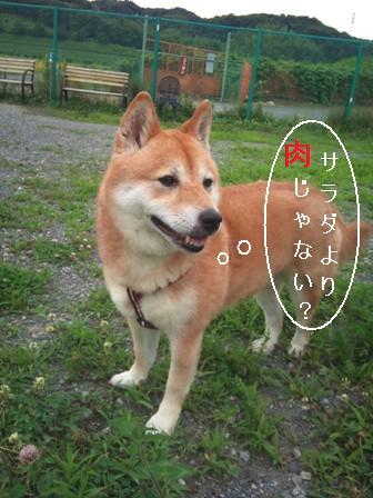 f0230380_207798.jpg