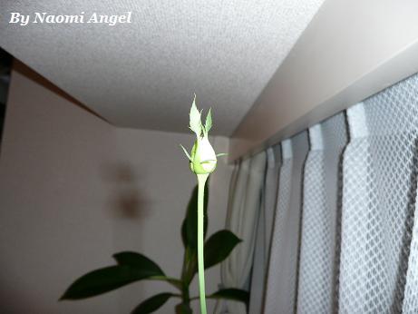バラが咲いた♪_f0186787_113601.jpg