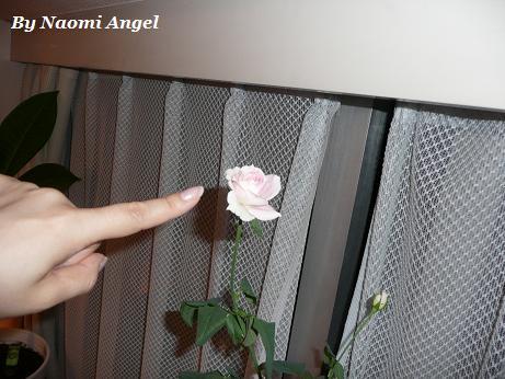 バラが咲いた♪_f0186787_11373087.jpg