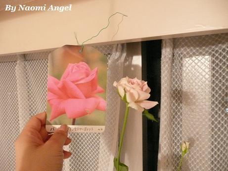バラが咲いた♪_f0186787_1138618.jpg