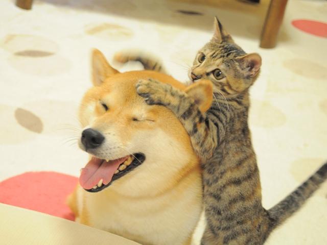 「かぼすちゃんとおさんぽ。」のかぼすママさん登場!_c0039735_18435325.jpg