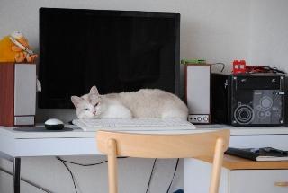 迷子猫のお友だち ダヤン首輪くん編。_a0143140_2329344.jpg
