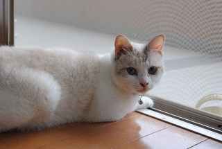迷子猫のお友だち ダヤン首輪くん編。_a0143140_23295274.jpg