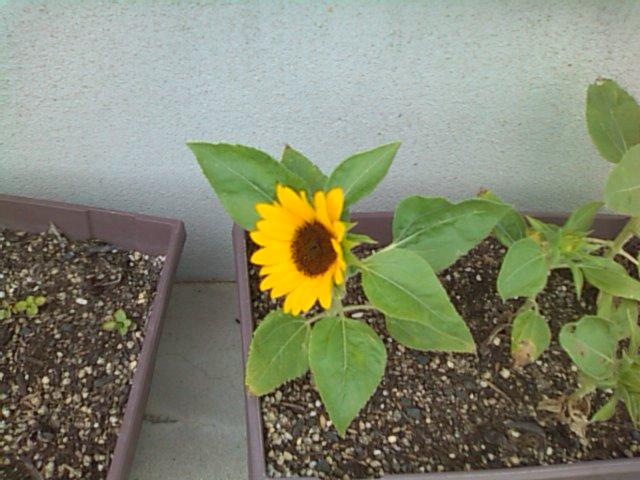 お花が咲いた♪_b0115751_21142298.jpg