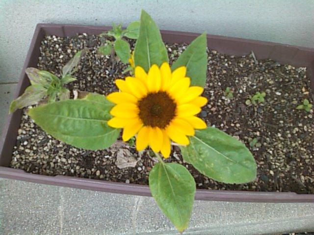 お花が咲いた♪_b0115751_21143110.jpg