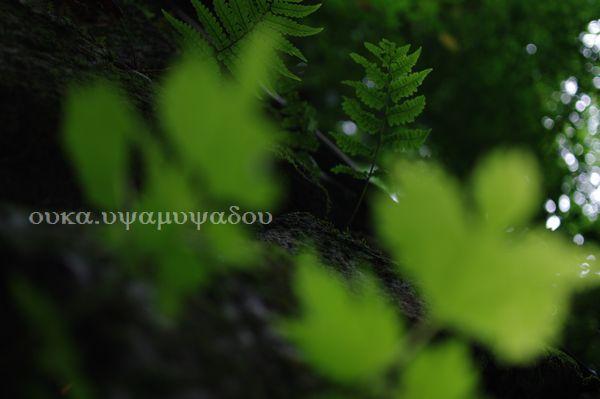 京都・大原三千院紫陽花_a0157263_21475119.jpg