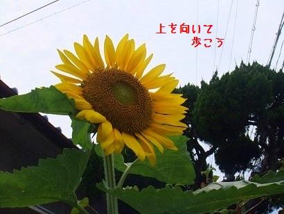 b0118850_10182359.jpg