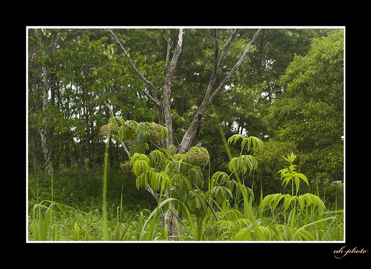 札幌市内に残る非常に珍しい篠路福移湿原_b0181889_610091.jpg