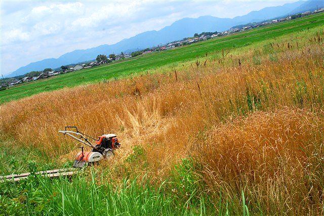 日野町 小麦ワークショップ ~最終章~_c0116714_2214677.jpg
