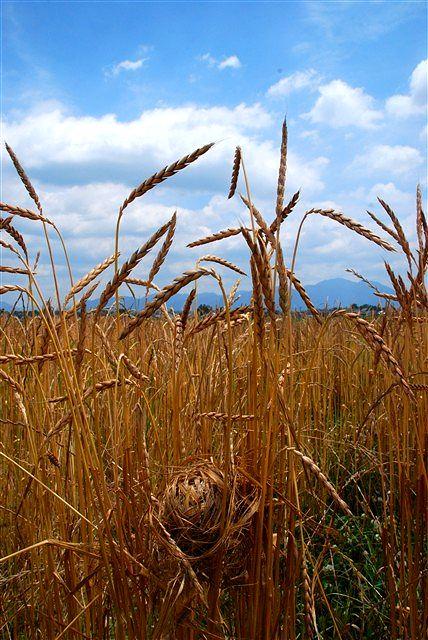 日野町 小麦ワークショップ ~最終章~_c0116714_2235760.jpg