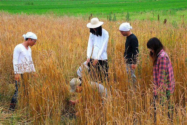 日野町 小麦ワークショップ ~最終章~_c0116714_227288.jpg