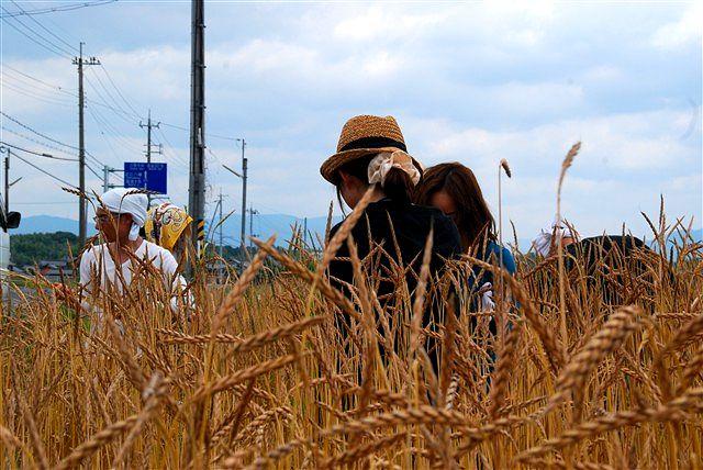 日野町 小麦ワークショップ ~最終章~_c0116714_2275025.jpg