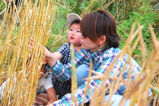 日野町 小麦ワークショップ ~最終章~_c0116714_2332377.jpg