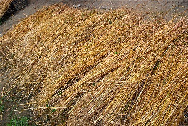 日野町 小麦ワークショップ ~最終章~_c0116714_247030.jpg