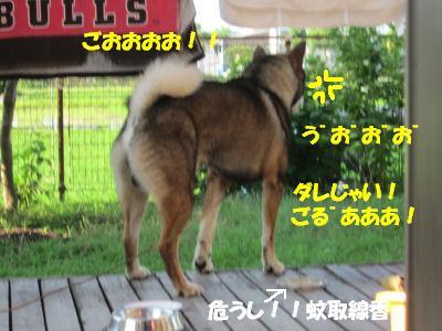 f0143123_19452761.jpg