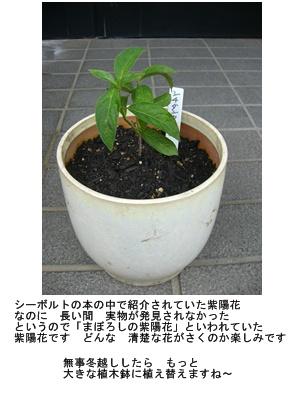 a0084343_18135582.jpg