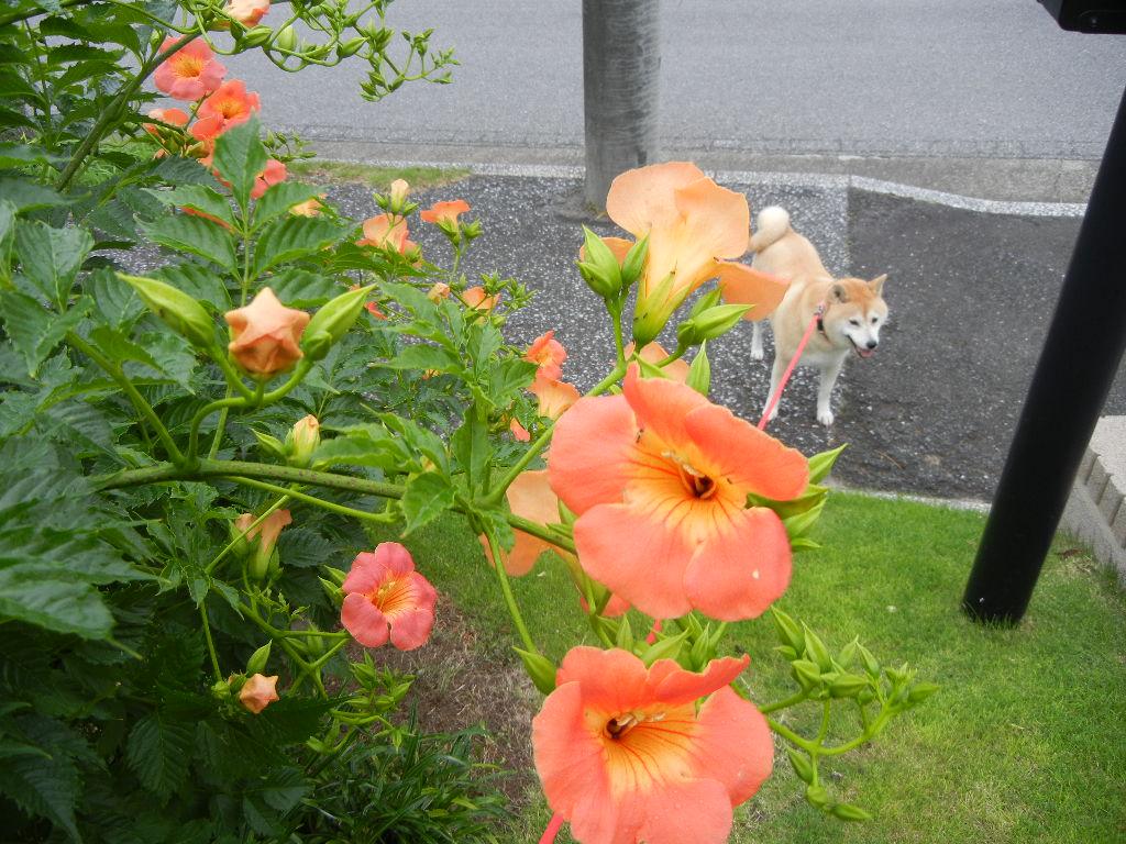 7月6日(水)マナーハウスでのアフタヌーンティ!_f0060461_1212874.jpg