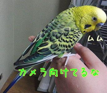 f0196665_23304910.jpg