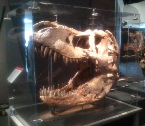 【恐竜王国ふくい】いよいよ明日!_f0229508_19534215.jpg