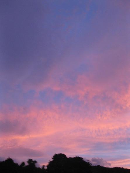 「紫川夜市フライヤー」到着~♪_a0125419_2025159.jpg