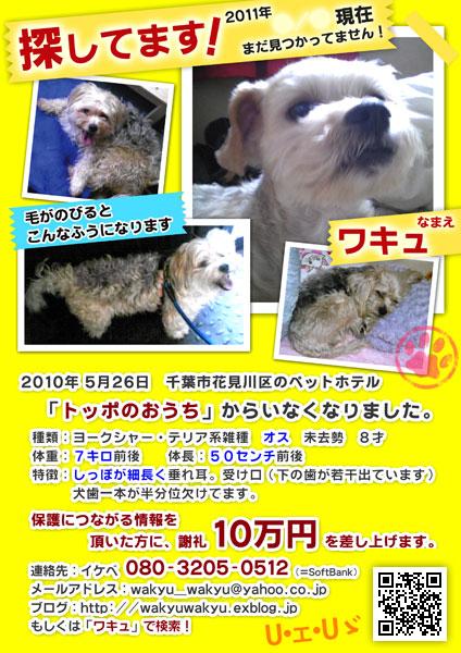 新ワキュ捜索ポスターできました!_d0170430_11254076.jpg