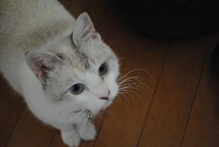 迷子猫のお友だち ダヤン首輪くん編。_a0143140_23294615.jpg