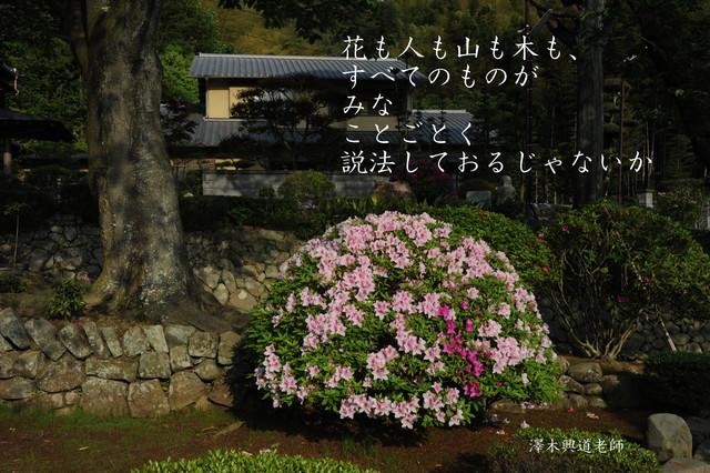 f0206452_1257503.jpg