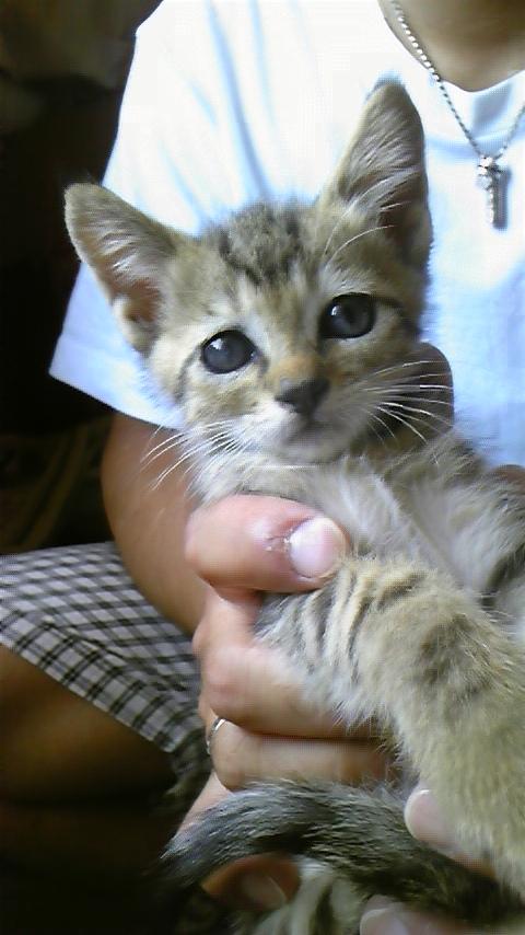 仔猫の里親募集_c0209659_19562163.jpg