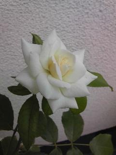f0074659_16122938.jpg