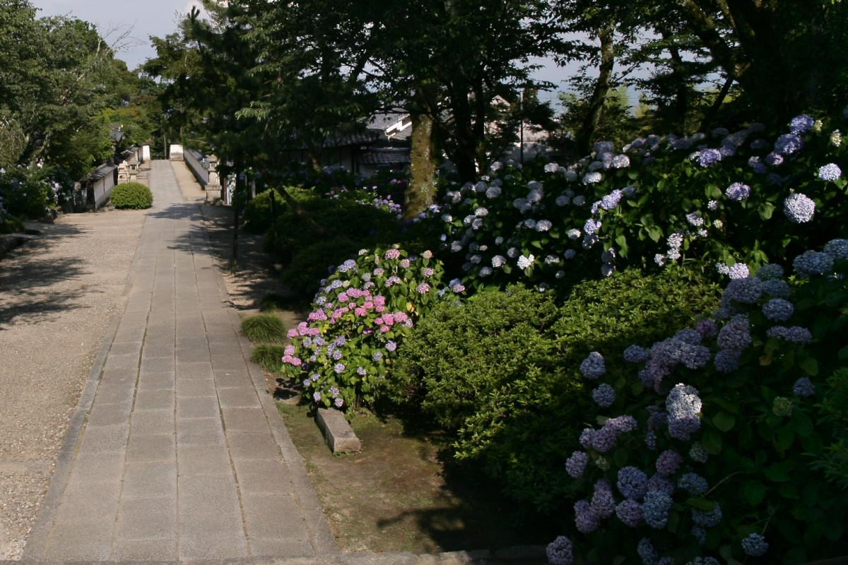 紫陽花 2011  <矢田寺>_f0021869_23191523.jpg