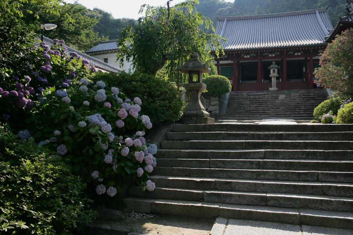 紫陽花 2011  <矢田寺>_f0021869_23194174.jpg