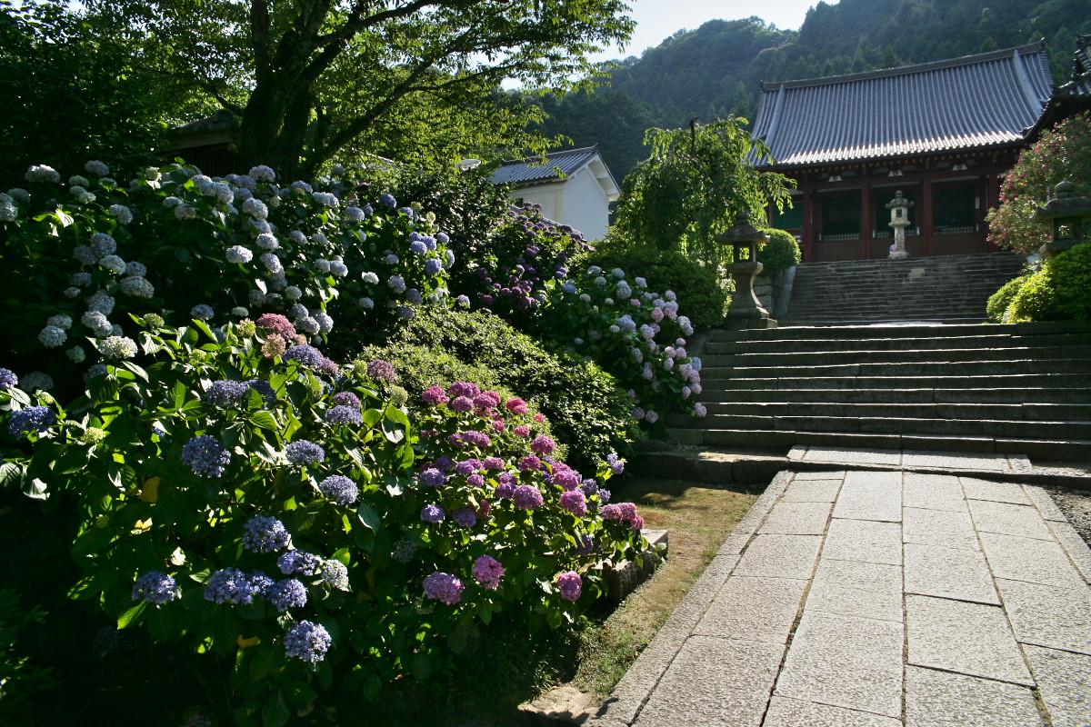 紫陽花 2011  <矢田寺>_f0021869_23201097.jpg